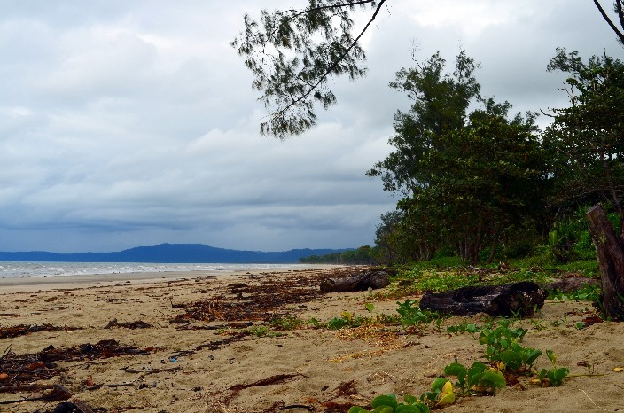 Cape Tribulation004