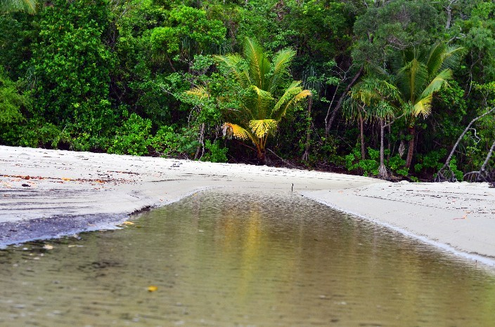 Cape Tribulation019