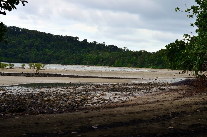 Cape Tribulation020