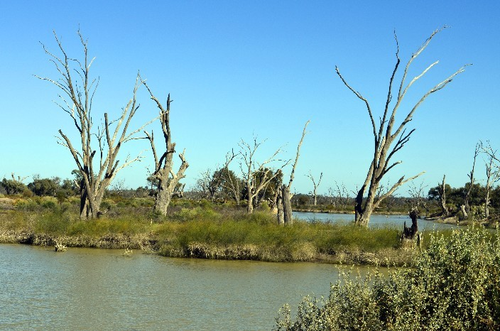 Murray River021