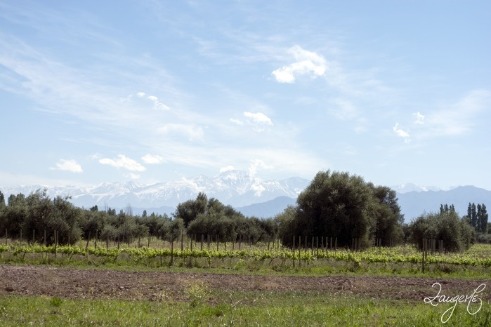 Mendoza Vineries 17