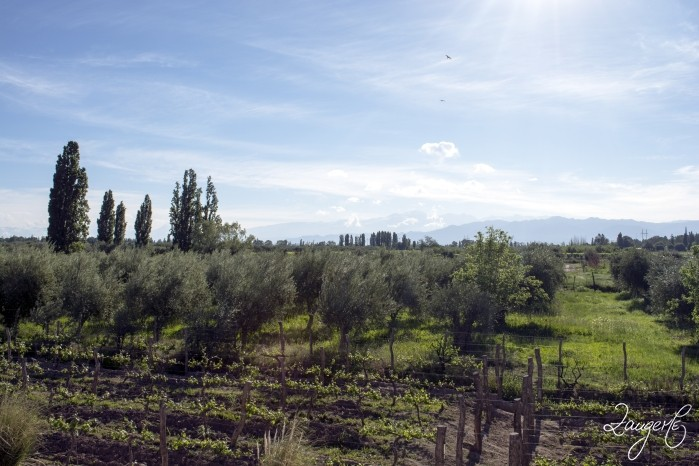 Mendoza Vineries 29