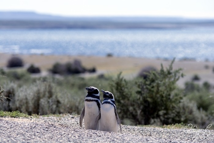 Puerto Madryn - Pinguins 10
