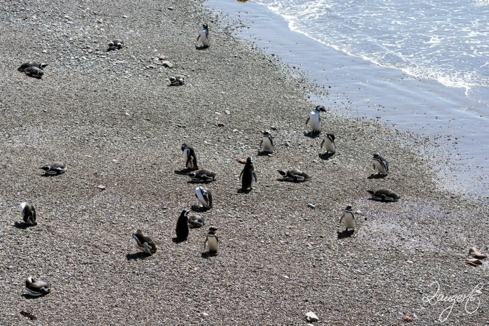 Puerto Madryn - Pinguins 18