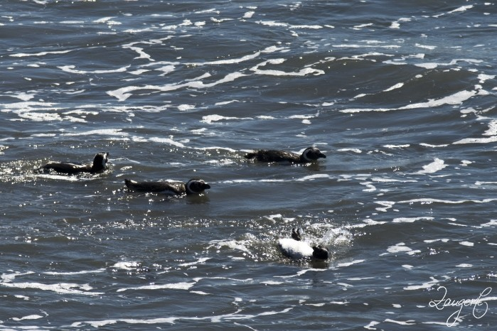Puerto Madryn - Pinguins 20