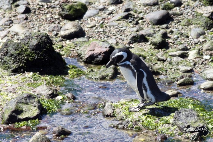 Puerto Madryn - Pinguins 22
