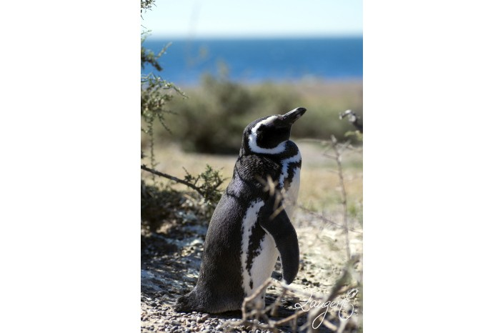 Puerto Madryn - Pinguins 34